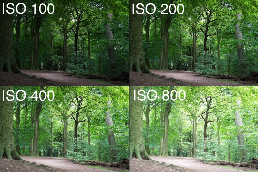 Guide To Iso Photography 3