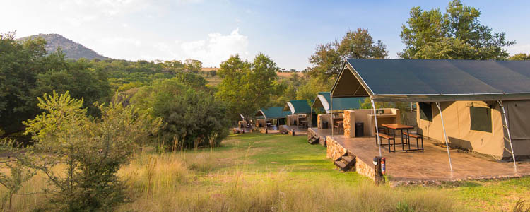 Bush Willow Camp